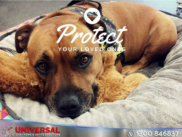 Protect Your Loved Ones With Universaltint