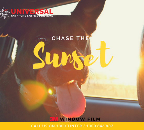 Protect Your Loved one with Universal Window Tint